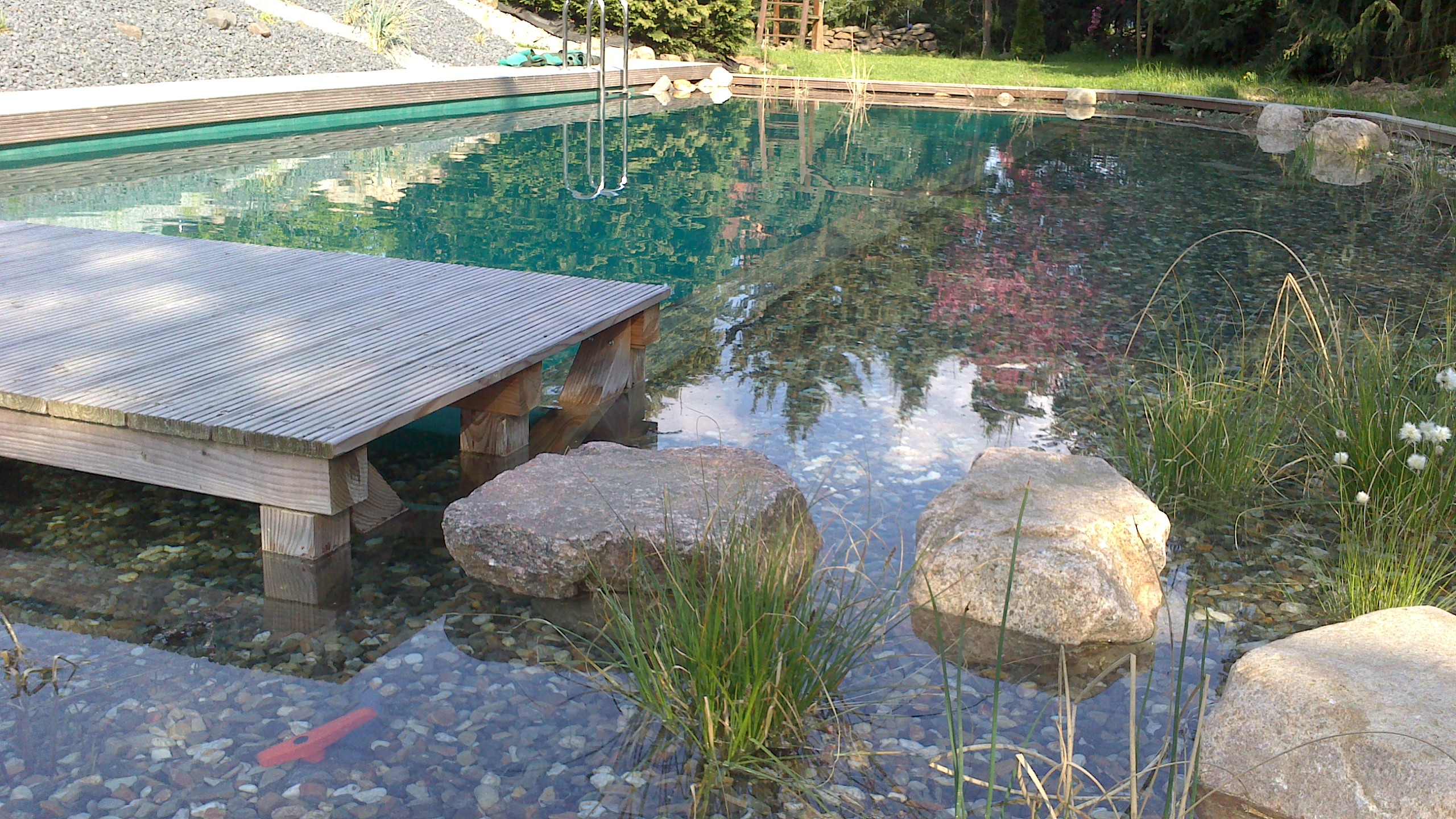 Bodhi baum schwimmteich northeim harz for Schwimmteich garten